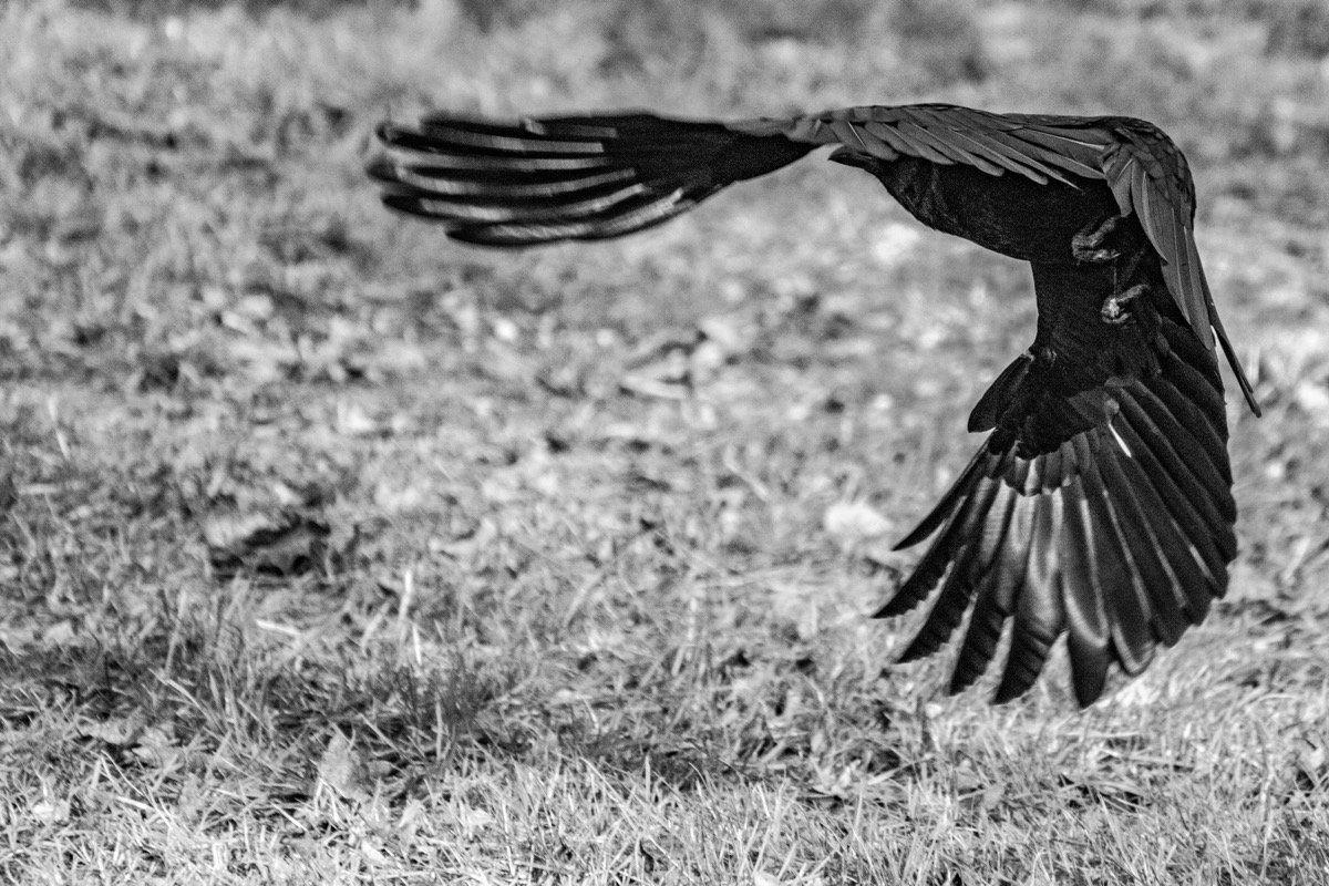 Vögel Im Flug Fotografieren