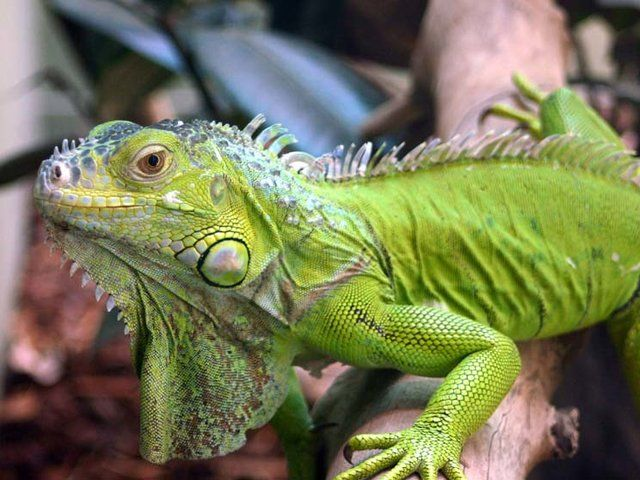 Which Pet is Perfect For Your Personality? A Lounging Lizard. For someone as laid back as you, you need a pet who is equally content to chill out when there's nothing pressing to do. A lizard will be yo...