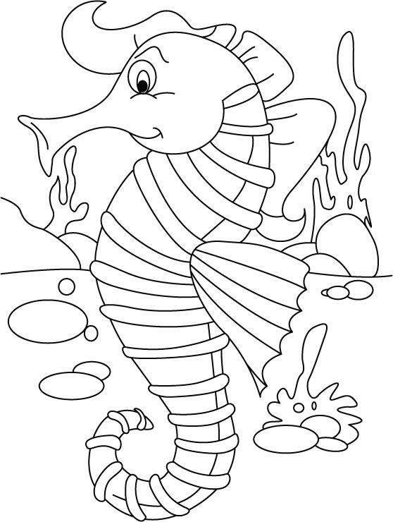 Seahorse ordering no back biting coloring pages download ...