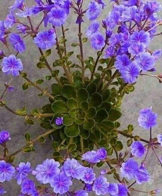 Pin de alicia bernabe en cactus cactus y suculentas for Vivero de plantas exoticas