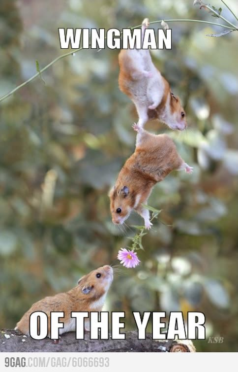 Hamsters have wingmen?