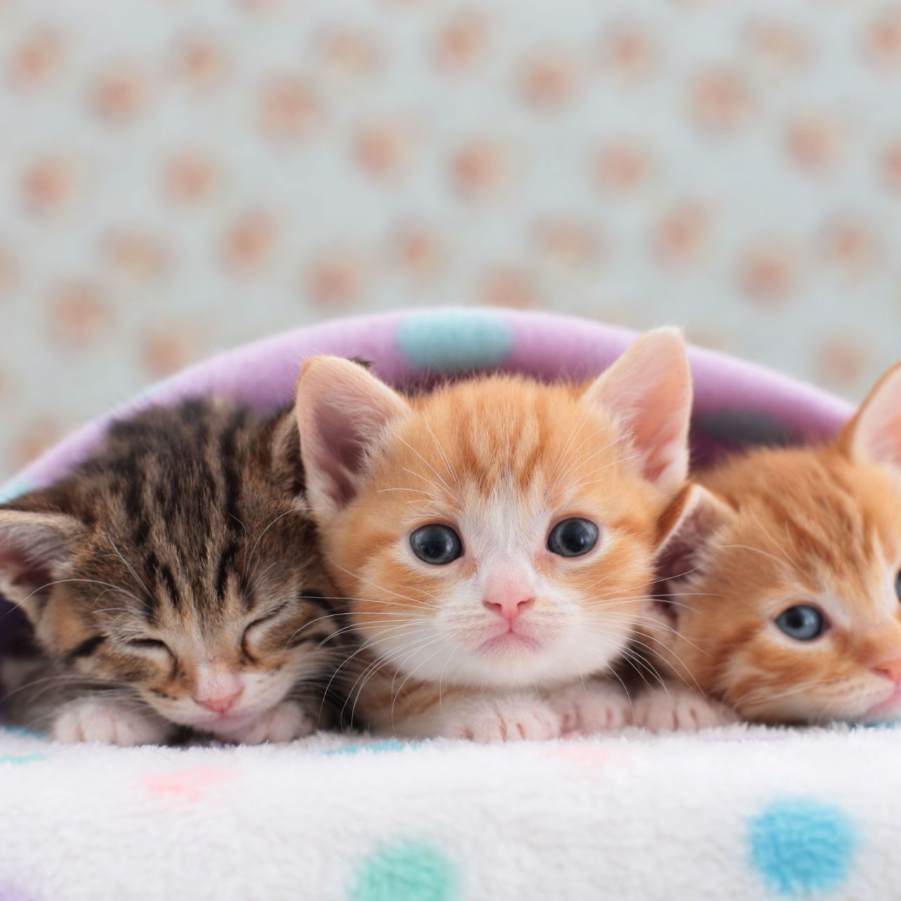 27 Tiny Cats That Will Fit Perfectly In Your Tiny House Kittens Cutest Tiny Cats Cute Kitten Gif