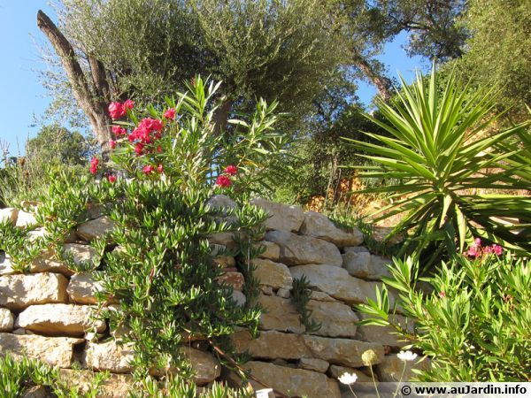Cr er un jardin m diterran en sans arrosage jardin - Creer un jardin mediterraneen ...