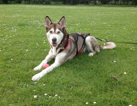 Akira on www.yummypets.com Dog, pets, puppy, pup, woof, doggie, animals, pooch, Yummypets