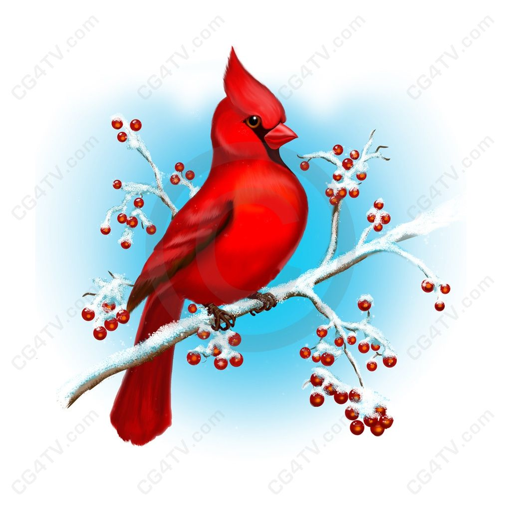 Beautful Cardinal Wallpaper Cardinal Birds Winter Art Red Bird
