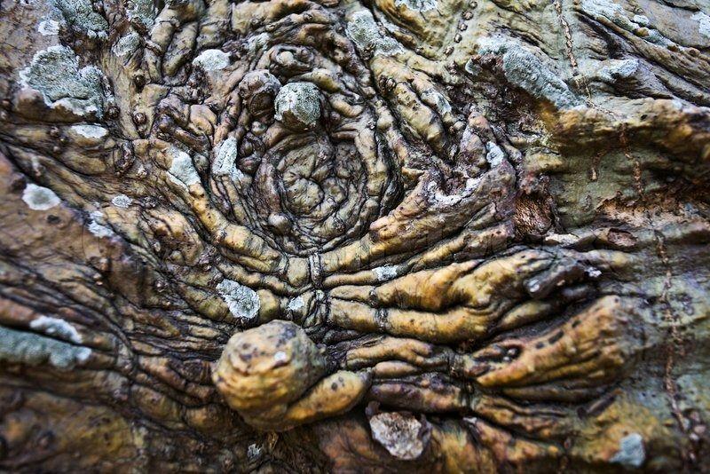 Tree bark texture | Stock Photo | Colourbox