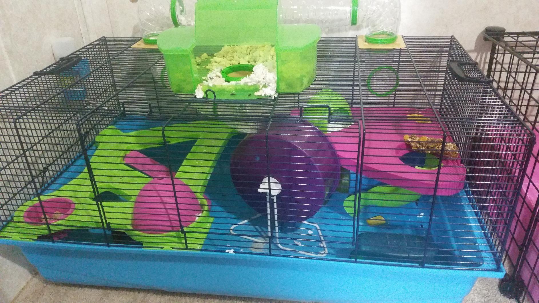 Amazon Com Customer Reviews Lixit Animal Care Savic Hamster