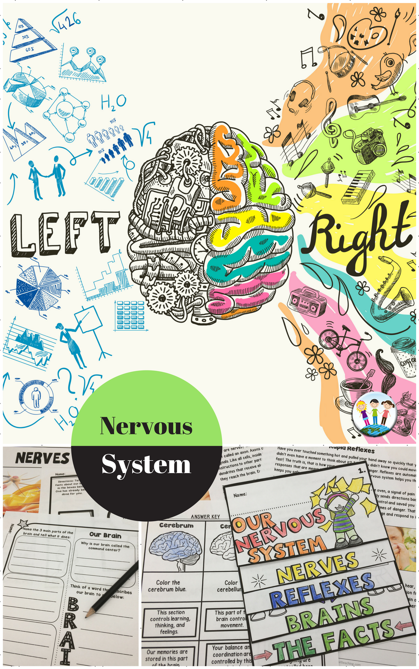 Human Body Systems Nervous System