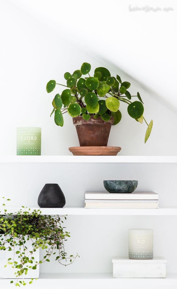 Urban Jungle Bloggers: Plantshelfie 2 by @heimatbaum