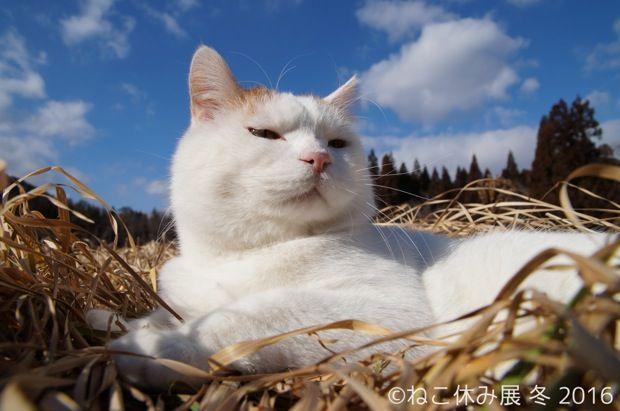 もふもふ猫に怒り顔猫。インスタで人気爆発のカリスマ猫写真展!〈ねこ休み展 冬 2016〉|ローカルニュース!(最新コネタ新聞)東京都 台東区|「colocal コロカル」ローカルを学ぶ・暮らす・旅する