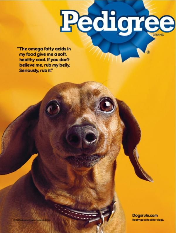 Funny Ad By Pedigree Showing A Man And A Dog Click Image To
