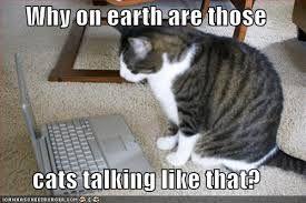 """Résultat de recherche d'images pour """"funny cats with words"""""""