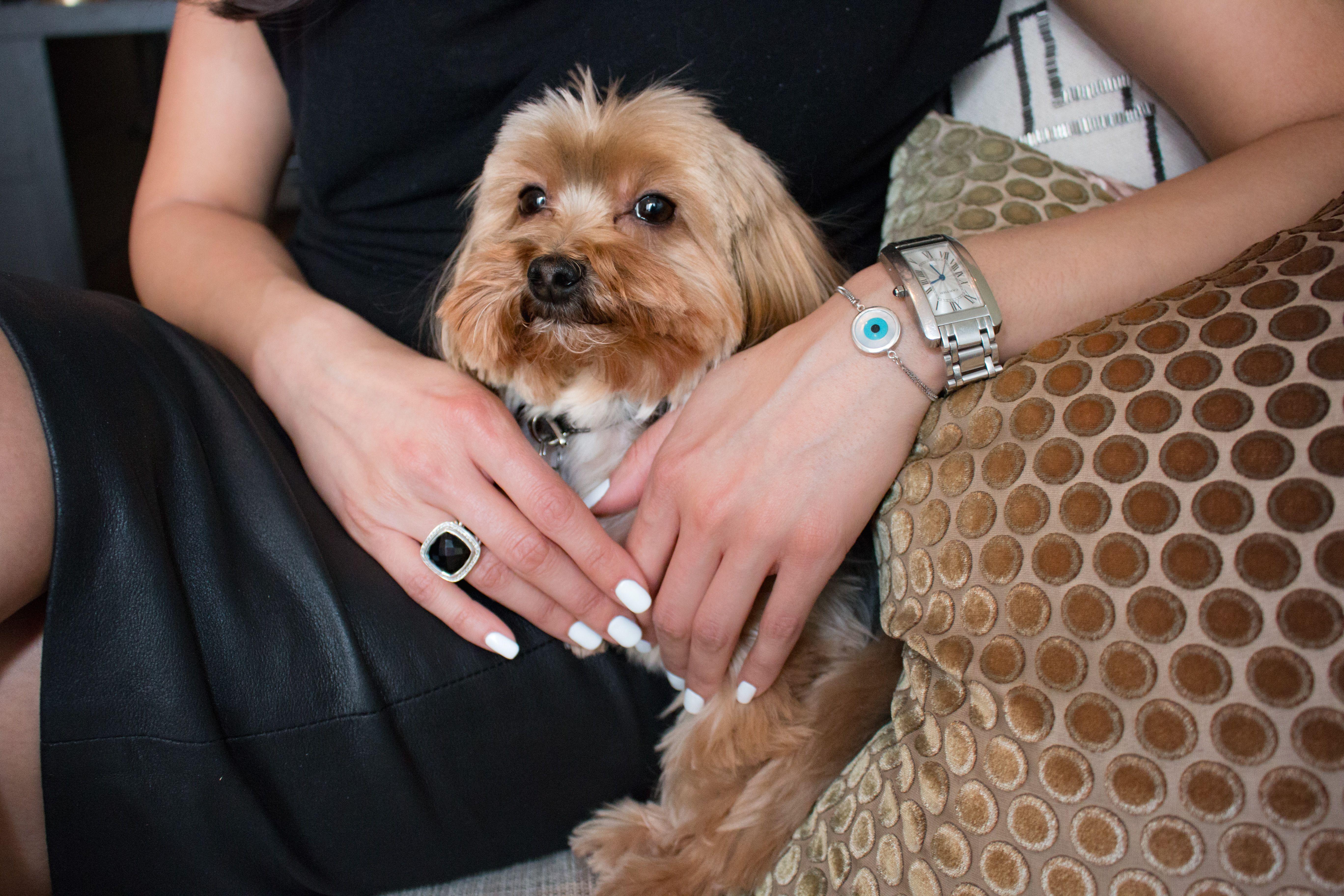 Halla Rafati Cool Pets Moving To Toronto Morkie