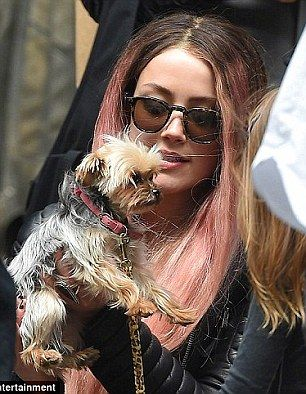 Johnny Depp S Wife Amber Heard Could Face Ten Years In Prison Johnny Depp Wife Johnny Depp Yorkie Puppy