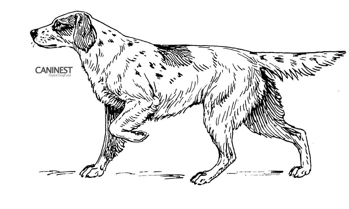 dog color pages printable | Dog Coloring Pages – Print Page for Free ...