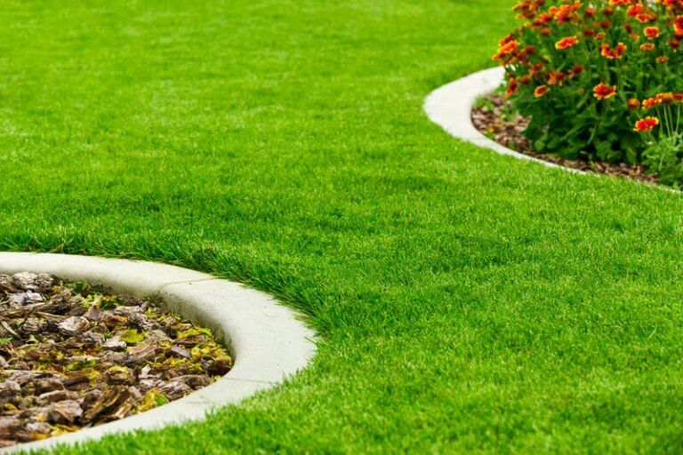 How to grow grass from seed the best way growing grass