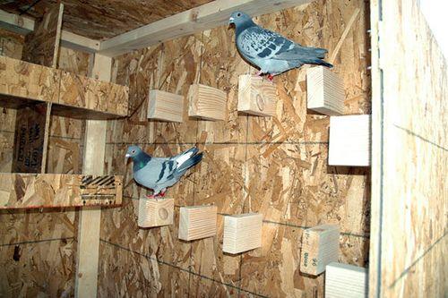 pigeon lofts   Please see my new pigeon website www.ashbyloft.com
