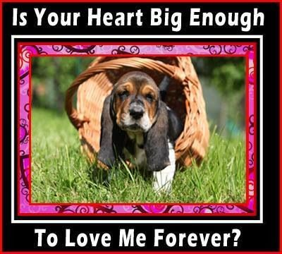 Basset For Ever Loved Oh Yes Indeed With Images