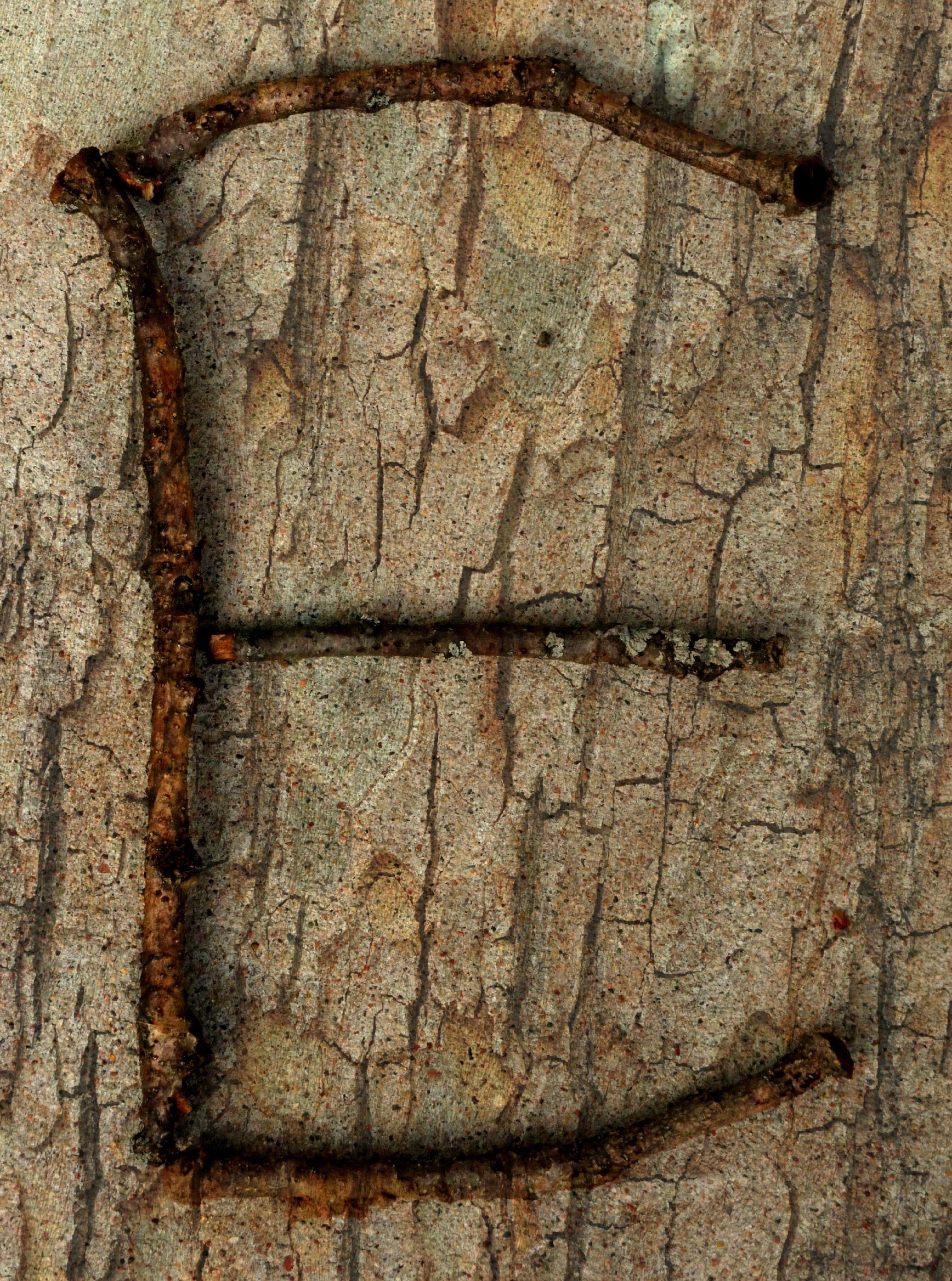 Letter E In Nature letter e in