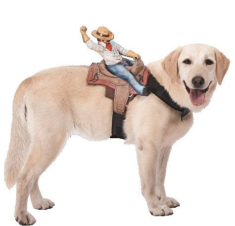 All styles of dog costumes for small dogs and large dogs. Shop for pirate and princess dog costumes ride on dog costumes and more.  sc 1 st  Pinterest & Ride On Cowboy Dog Costume - Party City I want my dog to do this but ...