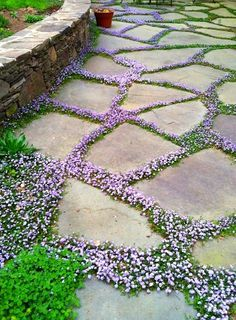 9 Spectacular and Unusual Garden Designs Tiny flowers Stone and