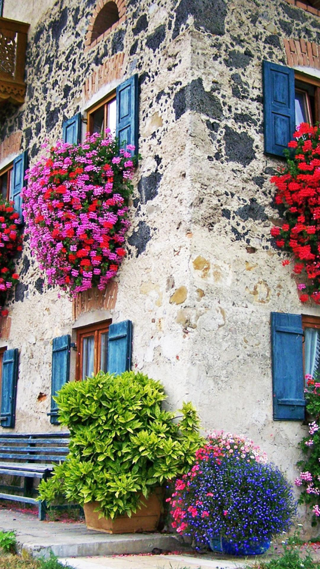 House With Colorful Flowers at Windows Smartphone