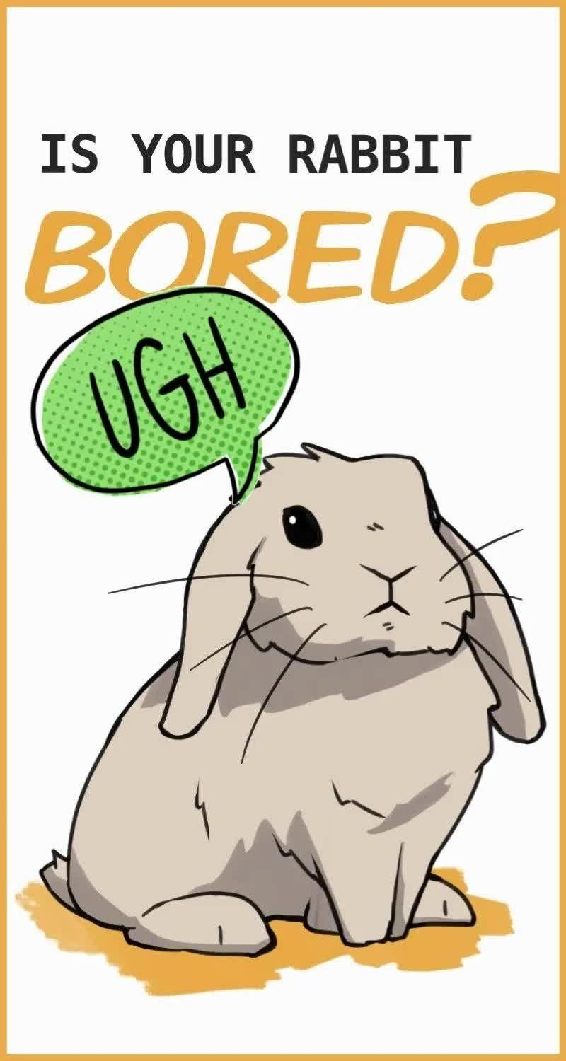 Bored Rabbits: How Do Rabbits Behave When They're Bored?
