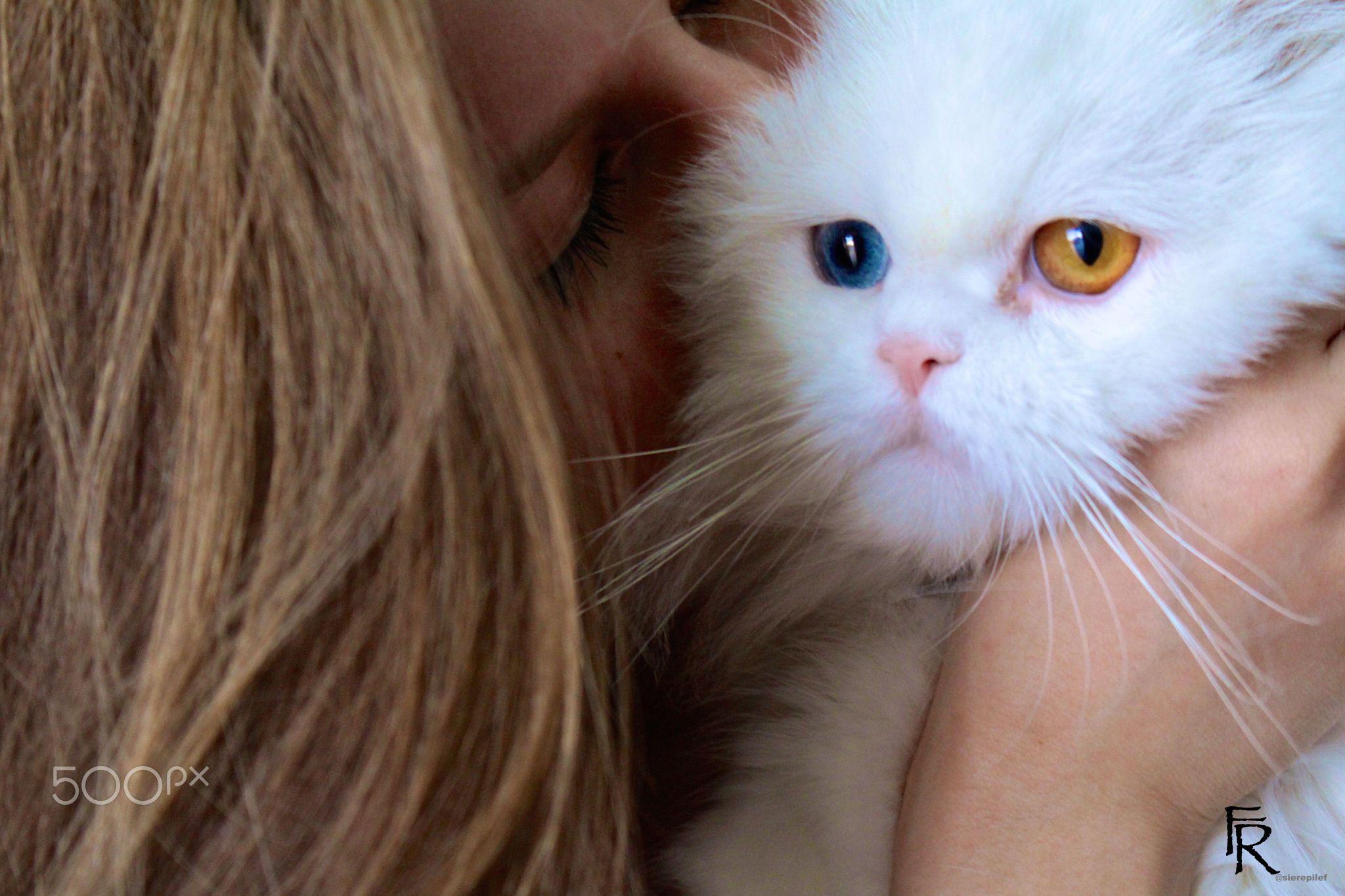 Eyes..so beautiful#cats