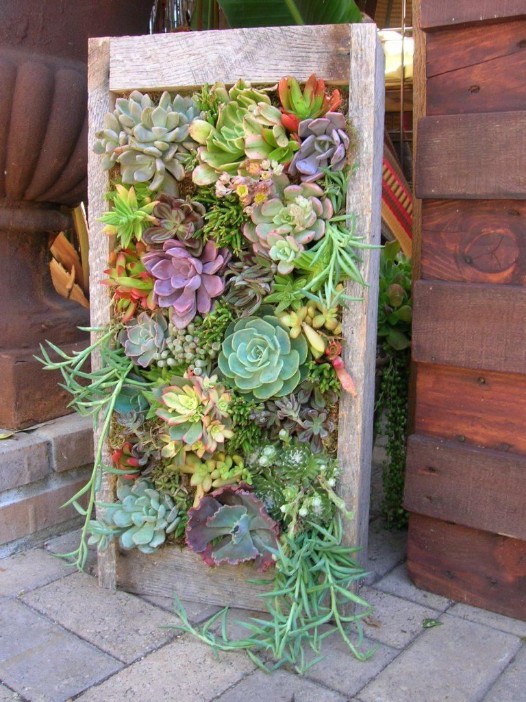 Un giardino di piante grasse! 20 esempi stupendi da cui trarre ispirazione…