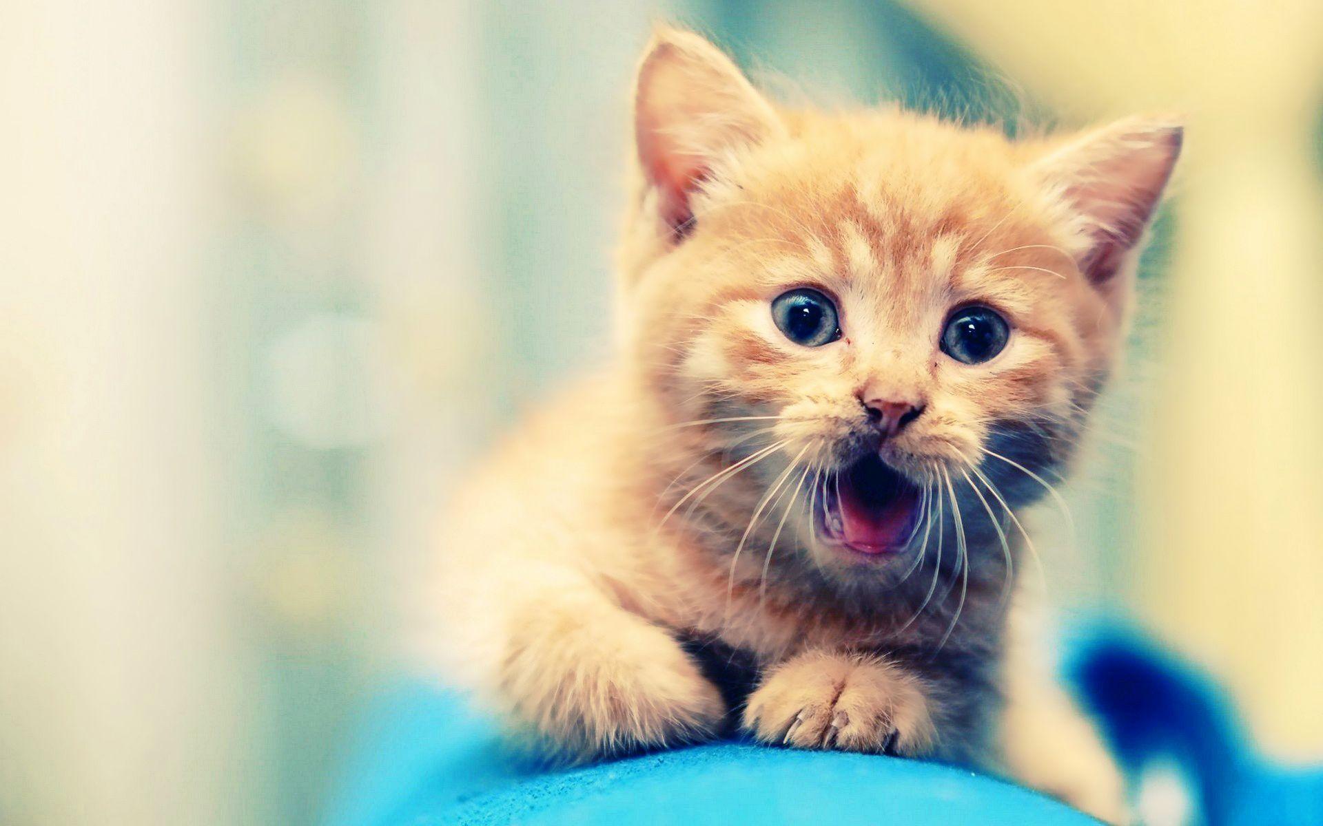 покажи мне картинки котиков эльфов