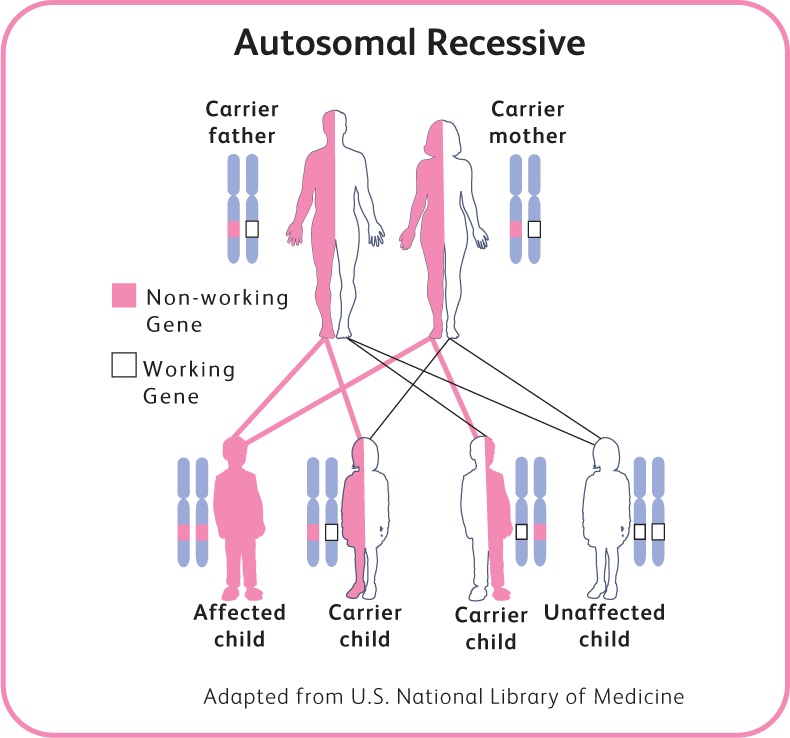 SMA can only occur if both parents carry the specific gene ...
