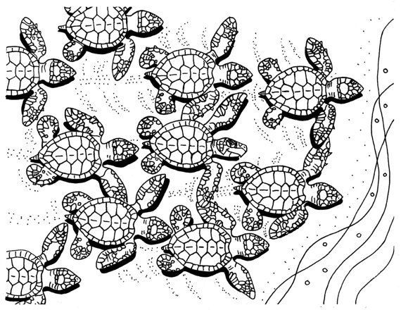 baby sea turtles coloring page adult printable coloring pages instant download - Turtle Coloring Pages For Adults