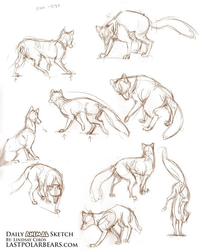 Easy Sketches Polar Bears