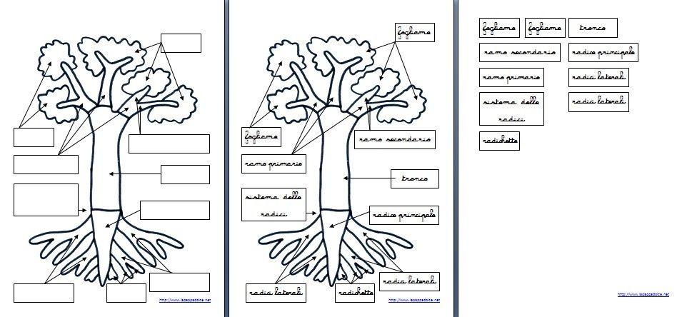 set attività incastro dell'albero Montessori