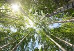 tops of summer birch trees and sun  by Kokhanchikov, via Shutterstock