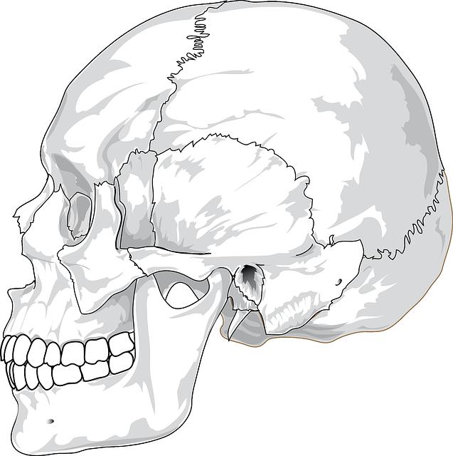 Free Image On Pixabay Skull Cracked Head Skeleton Skull Side View Art Skull Anatomy