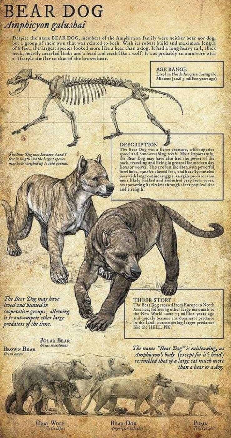 Bear Dog Perros oso, Animales prehistóricos, Animales