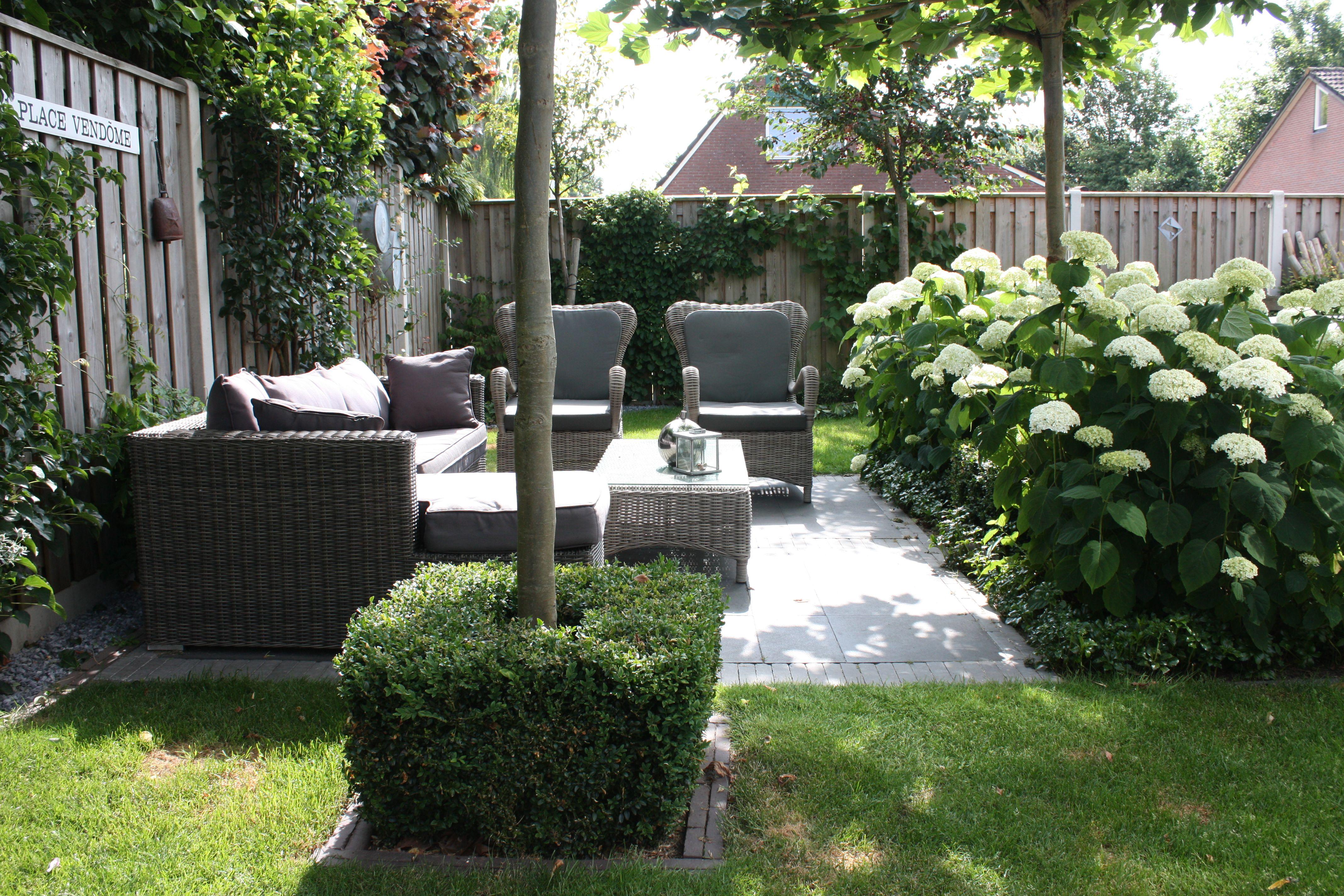 annabelle hortensia google zoeken tuin pinterest. Black Bedroom Furniture Sets. Home Design Ideas