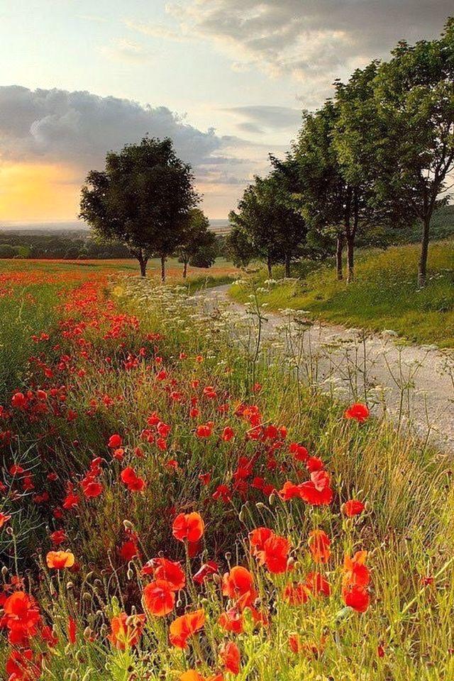 Beautiful Poppy Fields Landscape Photography Landscape Photos Beautiful Landscapes