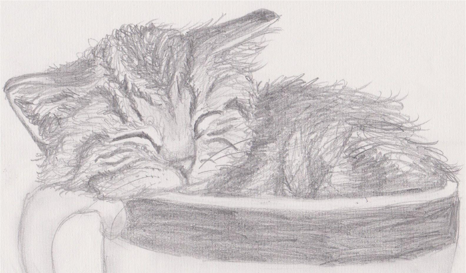 Kätzchen im Tässchen