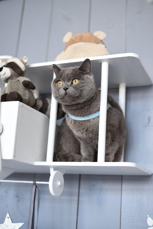 Blue dog harness blue cat harness cute harness cat harness