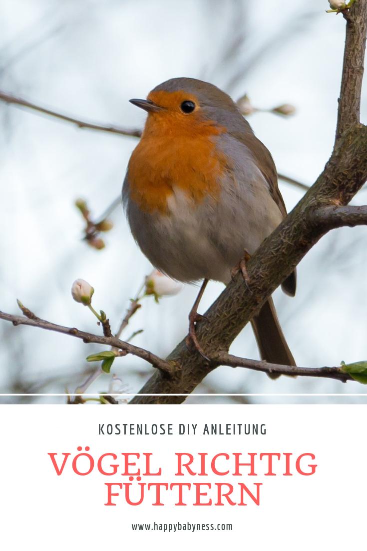 Vogelfutter Ringe Taler Kostenlose Diy Anleitungen Deutsch Garten Mit Kindern Nachhaltigkeit Natur Tierschutz Winter Fruhl Vogel Im Garten Garten Tiere