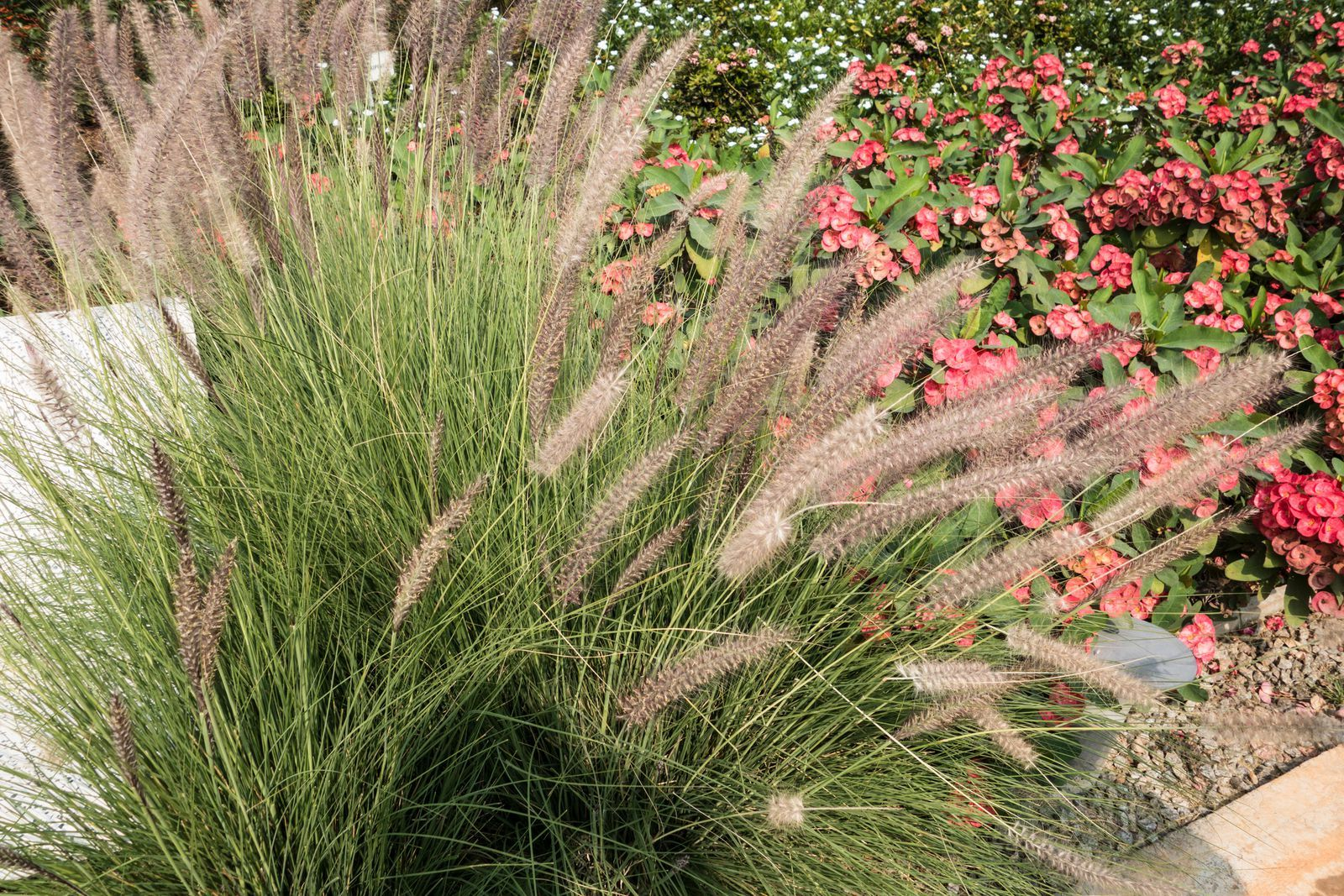These Are The Best Ornamental Grasses For Your Garden Ornamental Grasses Shade Plants Shade Perennials