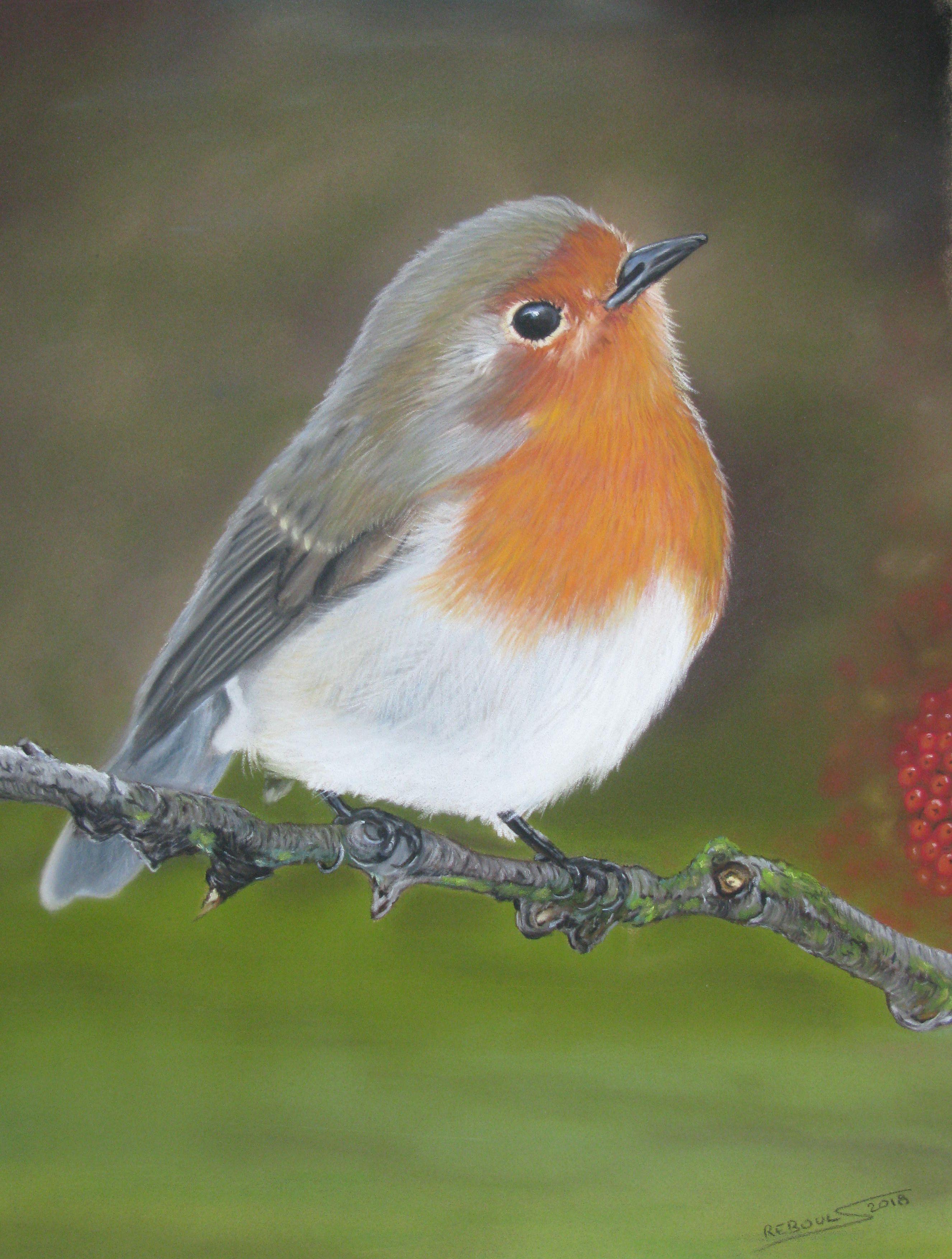 Le Rouge Gorge Prince Du Jardin Tableaux Animaux Dessin Oiseau Pastel Sec