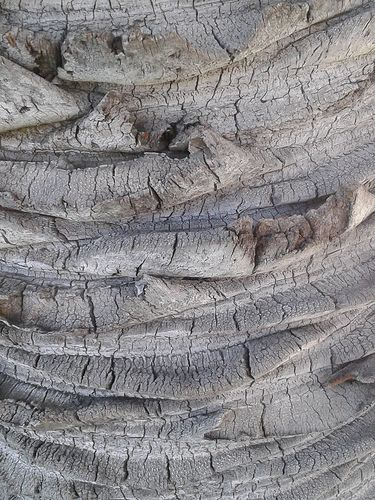 Palm Bark Natural Texture Tree Bark Patterns In Nature