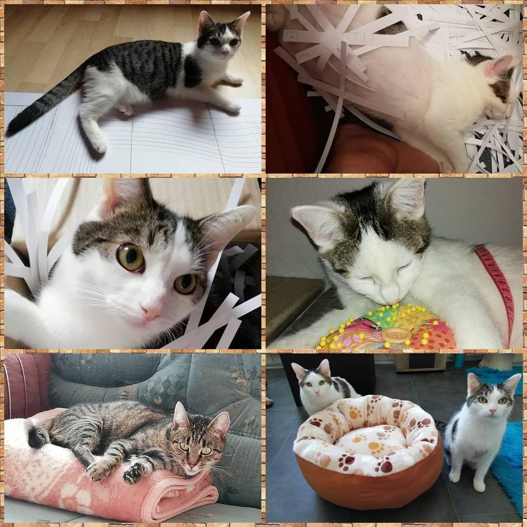 Hallo Zusammen Tag 9 Der Makeristnahvember Challenge Von Makerist Mit Dem Thema Meine Liebsten Nahpartner Was Cats Of Instagram Cat Love Cats