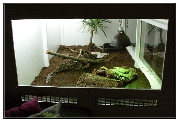 Argentine tegu enclosure