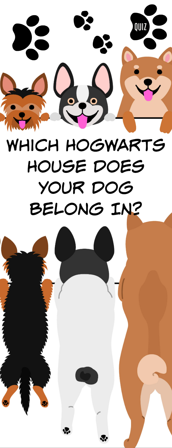 Which Hogwarts House Does Your Dog Belong In Harry Potter House Quiz Harry Potter Quizzes Harry Potter Dog