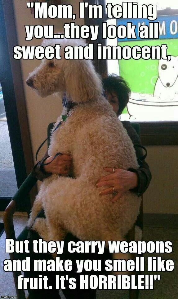 Repinned Mom Save Me Lol With Images Dog Grooming Shop Pet