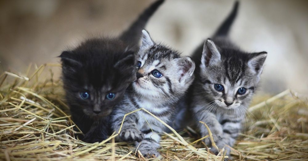 Community Cats Provides Humane Feral Cat Traps To Rescues To Help